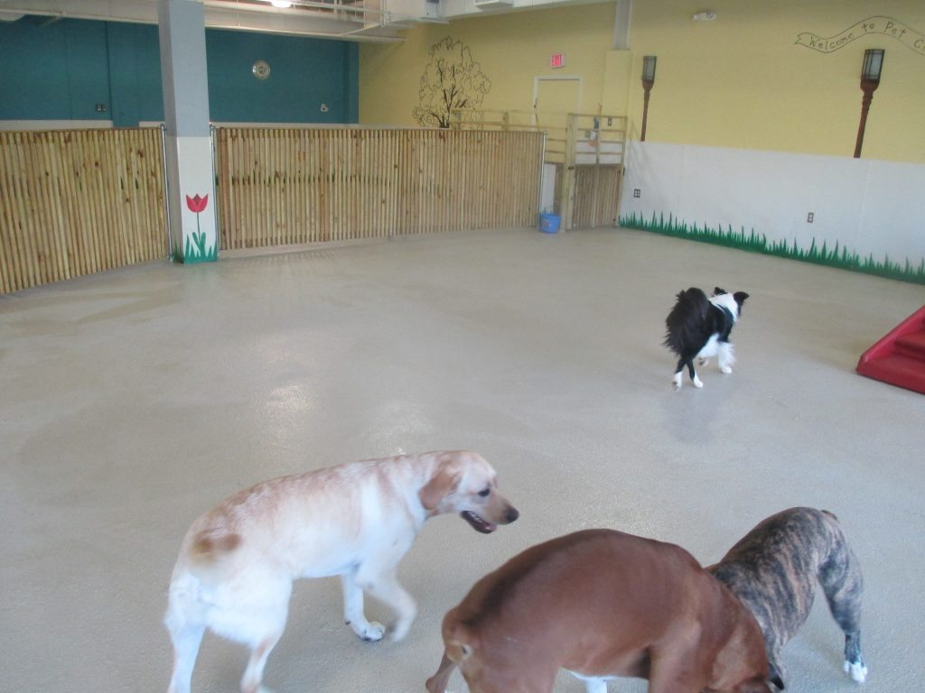 animal habitat